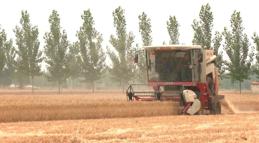 曲阜44.6万亩小麦收获进尾声 农机部门做好服务确保颗粒归仓