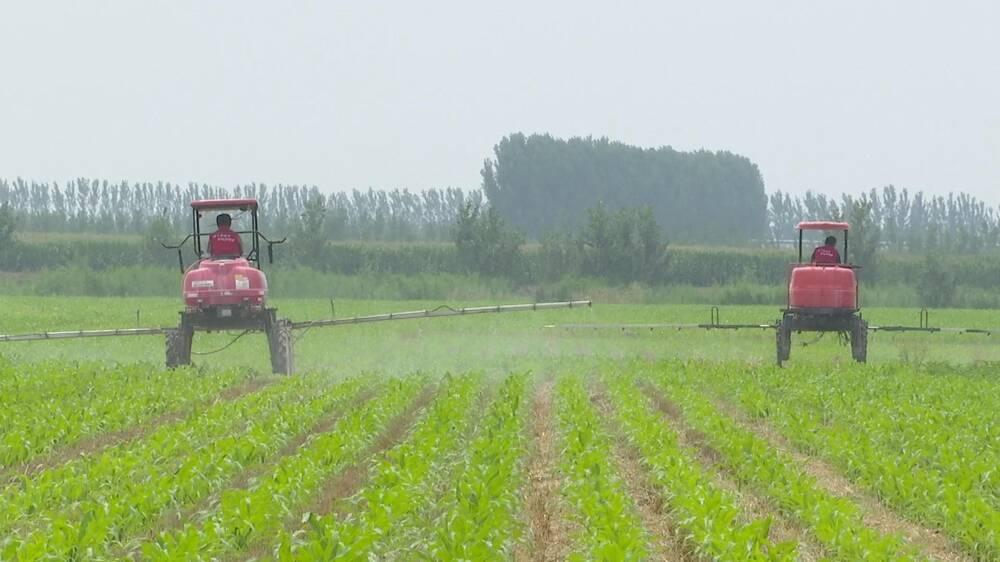 德州齐河构建市场化农业生产托管服务模式,降本提质又增收