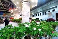 斩获13金15银!菏泽牡丹在第十届中国花卉博览会大放异彩