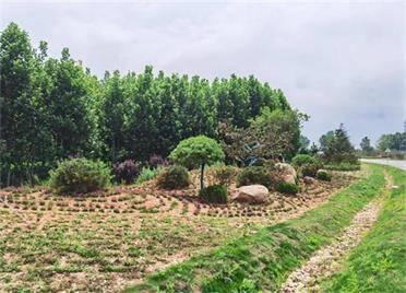 威海西部環山路、206國道沿線綠化提升工程全面完工