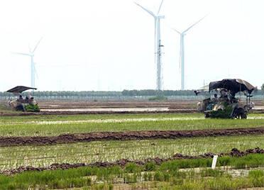 """德州庆云开启""""稻麦两季轮作""""模式 2500亩水稻正在插秧"""