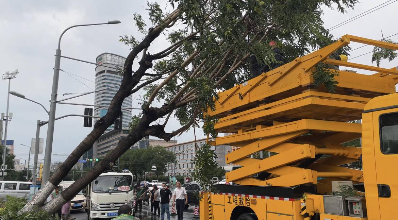 济南强对流天气来袭!树木连根拔起,压到公交电车电线