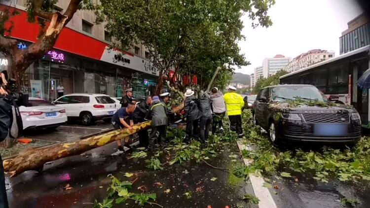 """被風吹斷的樹干與車輛來了個""""親密接觸"""" 威海多部門工作人員聯合處置"""