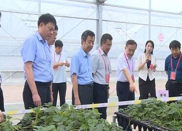 2021中國·威海草莓產業論壇在威海南海新區舉行