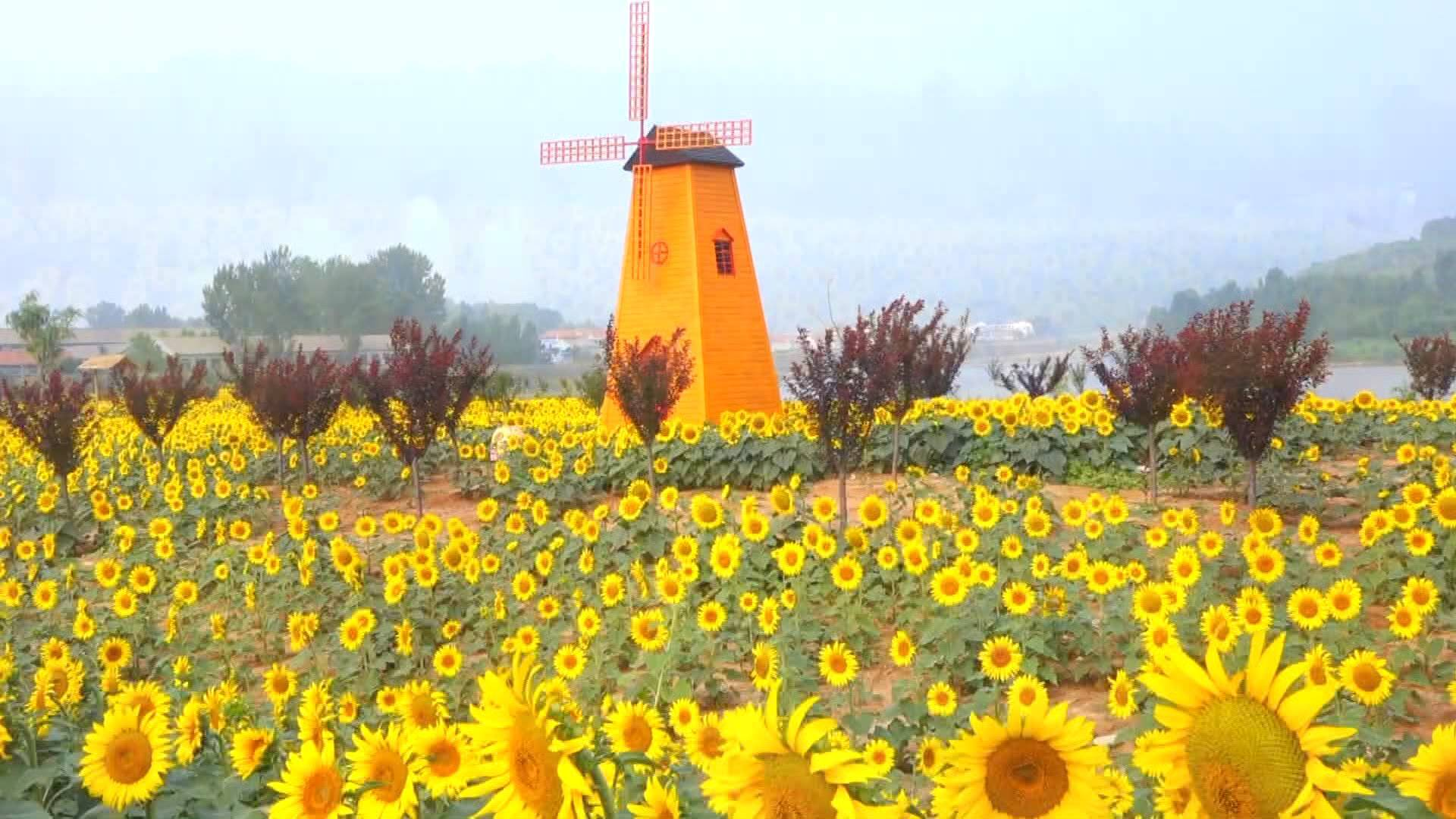 花开盛夏!荷花、向日葵、绣球、紫薇……快来山东这几个地方赏花度夏吧