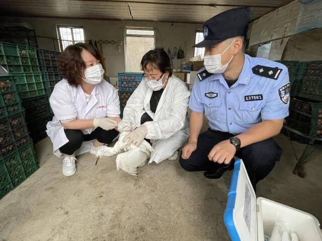 國家二級保護動物白鷺受傷倒在路邊 威海警民合力救治