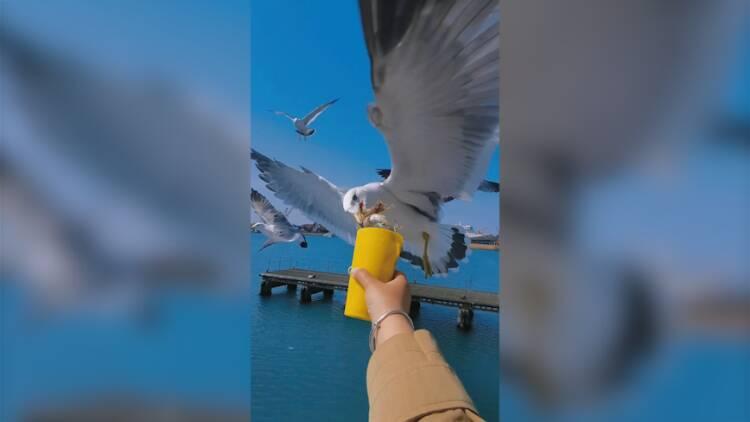 """威海有座""""鷗鷺王國"""",在海鷗環飛中擁抱夏日清涼"""
