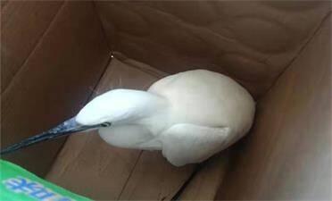 威海:警民救助一只小鳥,竟是國家二級保護動物