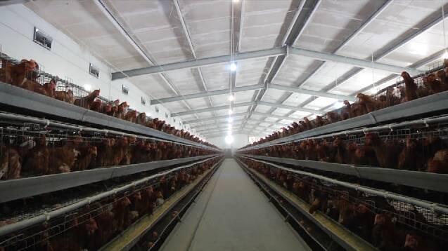 源头收集、二次利用!潍坊畜禽粪污资源化利用率达超过93%