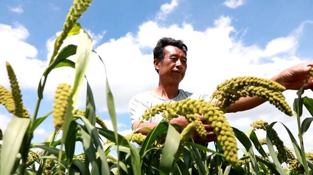 潍坊昌乐:发挥火山农业优势资源 以产业发展带动乡村振兴