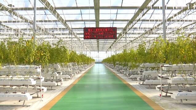 """绿色防控、水肥一体化……潍坊以农业""""绿色技术""""推进农药化肥""""减量增效"""""""