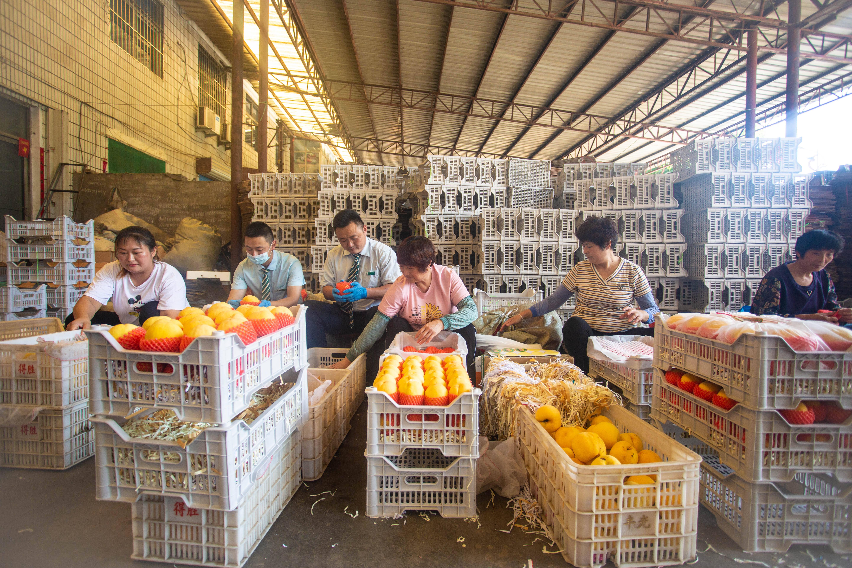 """沂源邮政启动""""万单黄桃""""项目 让农产品出村进城不再难"""