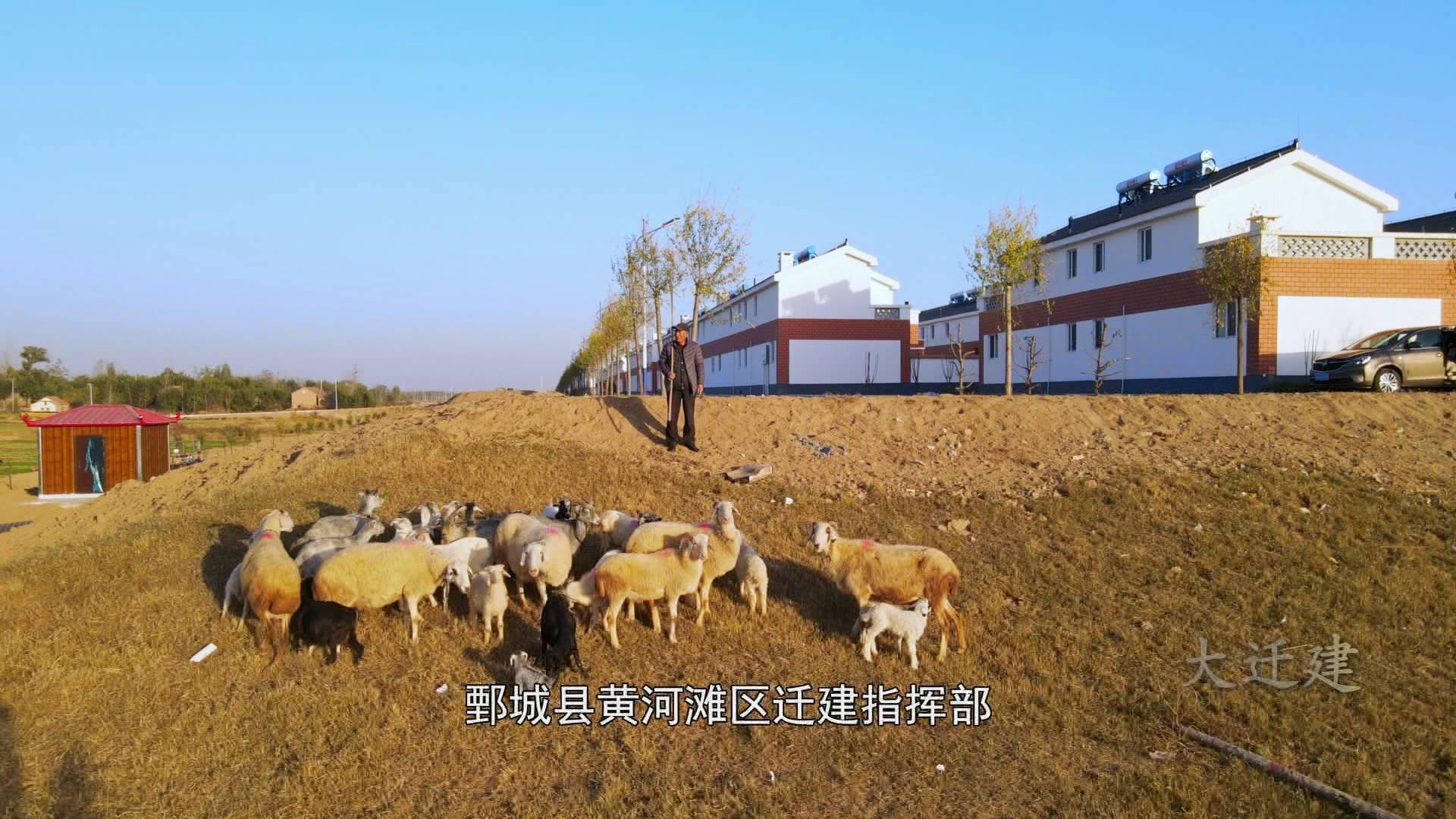 """大迁建 黄河滩区羊倌儿住进""""二层小楼"""" 无处安家的羊群有了着落"""