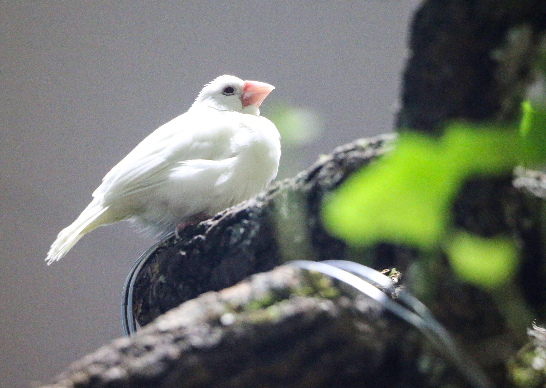 """济南这片""""热带雨林""""免费参观!140余种动植物带你徜徉雨林世界"""