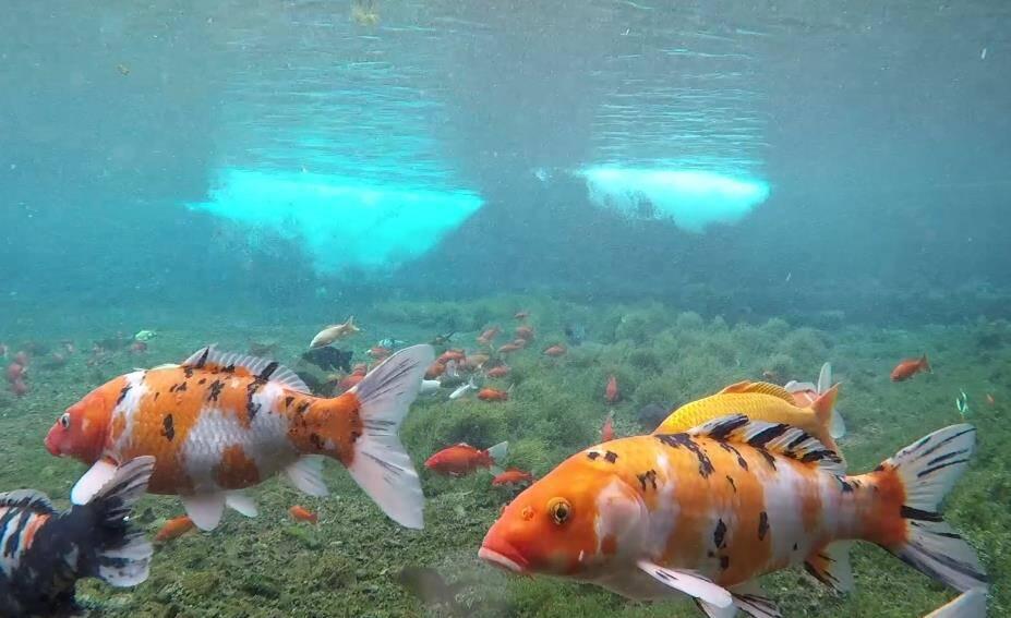 诗画山东|灵动泉水营造梦幻景象,黑虎泉水下的样子你可见过?