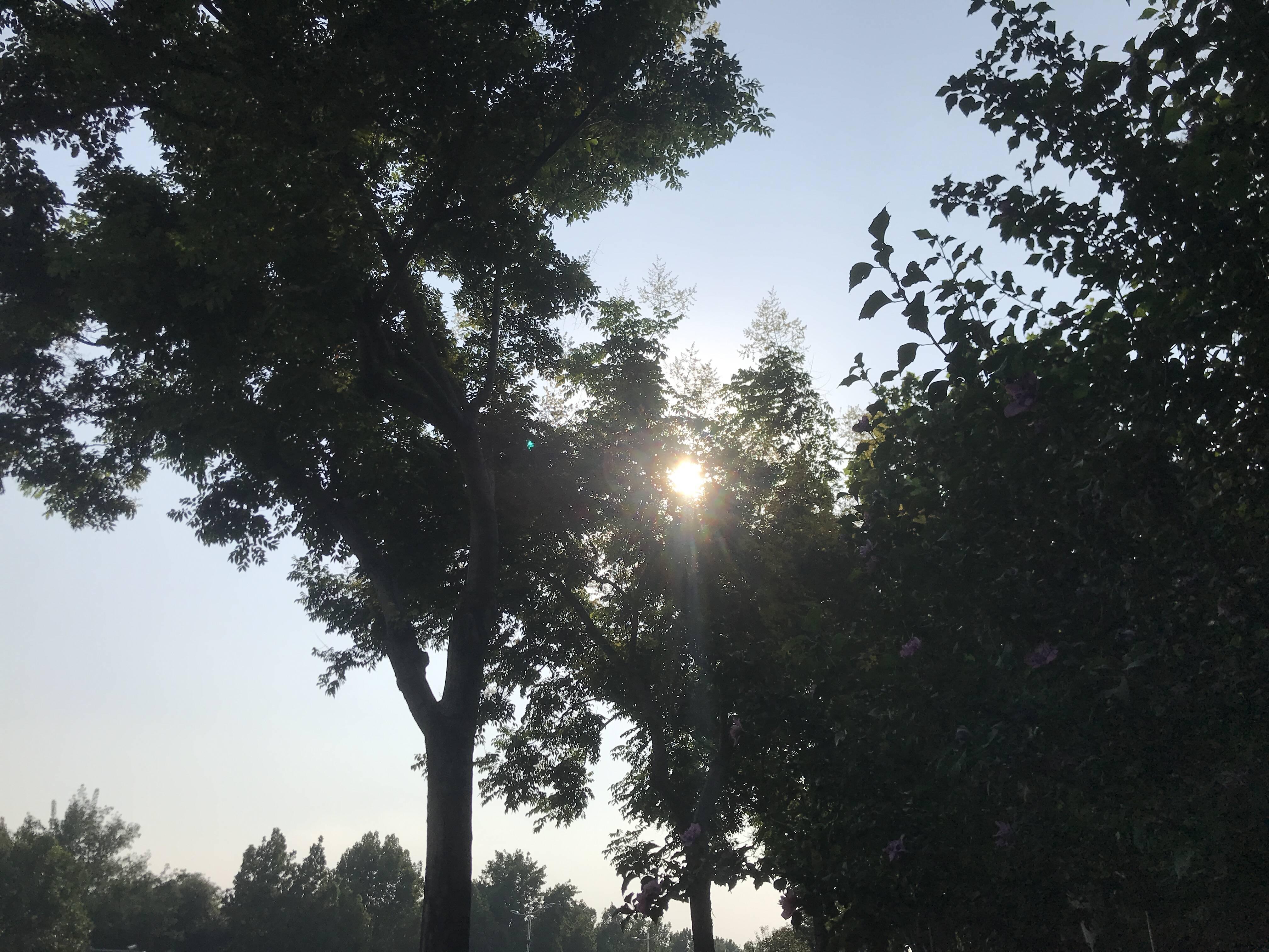滕州荆河36℃!23个监测站气温超35℃ 山东未来四天多晴热天气