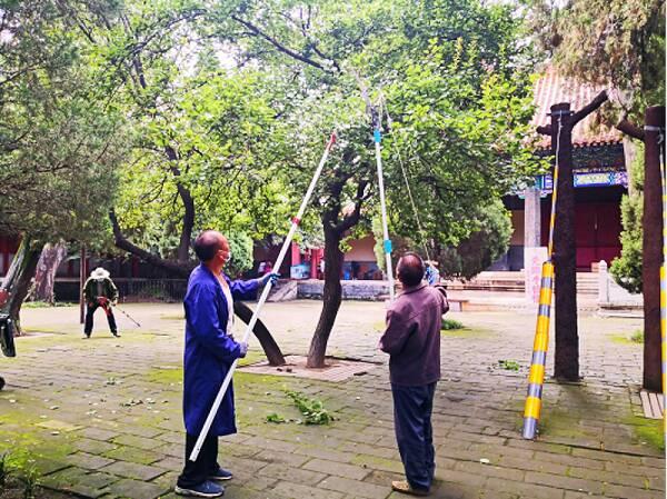 恪守职责迎急雨 曲阜市文物局多措并举保护古树名木