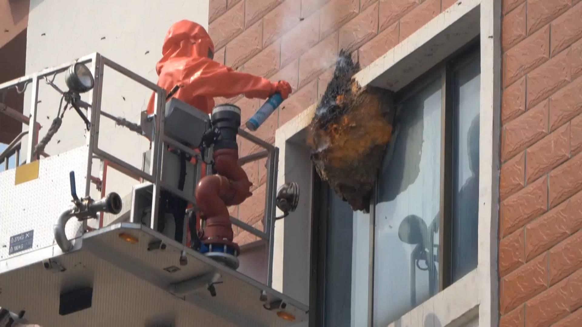 小区惊现多处巨型蜂窝悬挂窗外 威海消防火攻+水攻紧急拆除