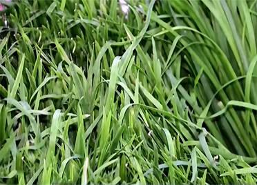 """央视《朝闻天下》关注德州:蔬菜上市量日超3万吨 保障""""两节""""供应"""