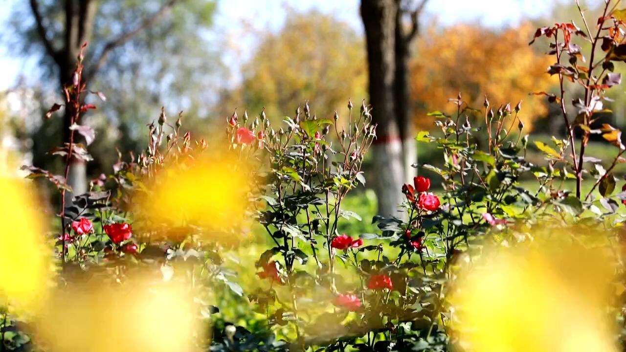 【诗画德州】平原:秋风起处秋意浓 踏秋赏景正当时