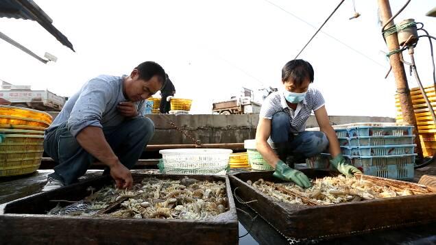 梭子蟹、海螺、皮皮虾应有尽有!潍坊寿光渔民收获忙
