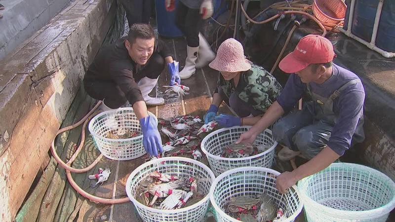 潍坊昌邑:渔民出海归来收获多 海蜇蟹子载满船