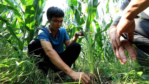 潍坊全市秋粮种植面积突破568万亩 秋收工作将推迟至10月进行