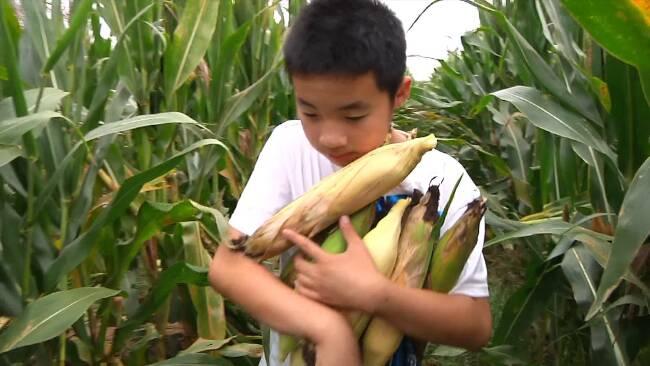 掰玉米、摘桃子!潍坊寿光学子以田间劳动感受丰收喜悦
