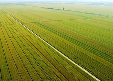"""德州筹建中国农业食品创新产业园区 总体规划""""三园三中心""""具备""""九大基地""""功能"""