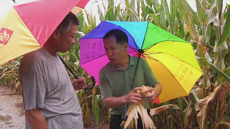潍坊诸城:持续阴雨不用愁 农技专员到田间地头开展技术指导