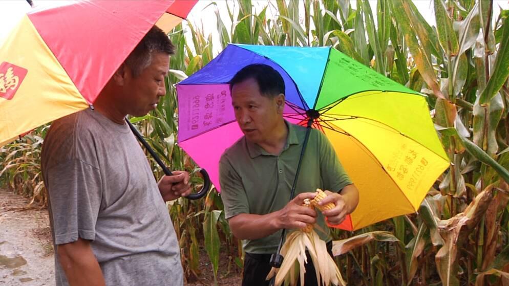 """潍坊诸城:降雨过后,农技专家走进田间""""把脉问诊""""开良方"""