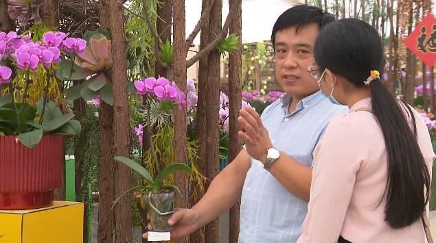 除了自主研发还能引进驯化!潍坊青州花卉生产品种突破3000个