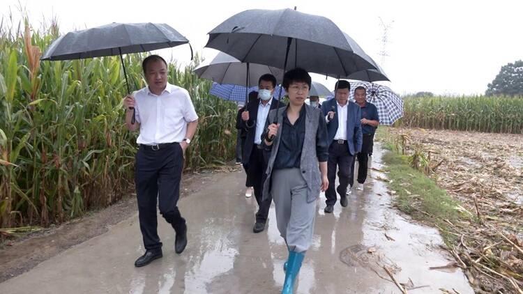聊城市长李长萍到东昌府区检查城乡防汛、房屋安全、农田排涝等工作
