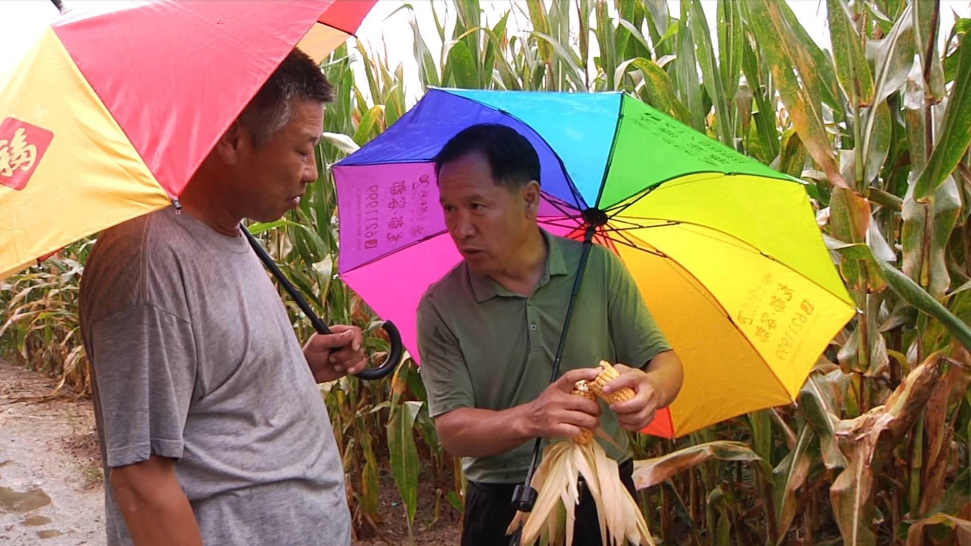山东明天起天气逐步转晴,省气候中心:紧急排涝,组织人工抢收抢晒玉米等作物