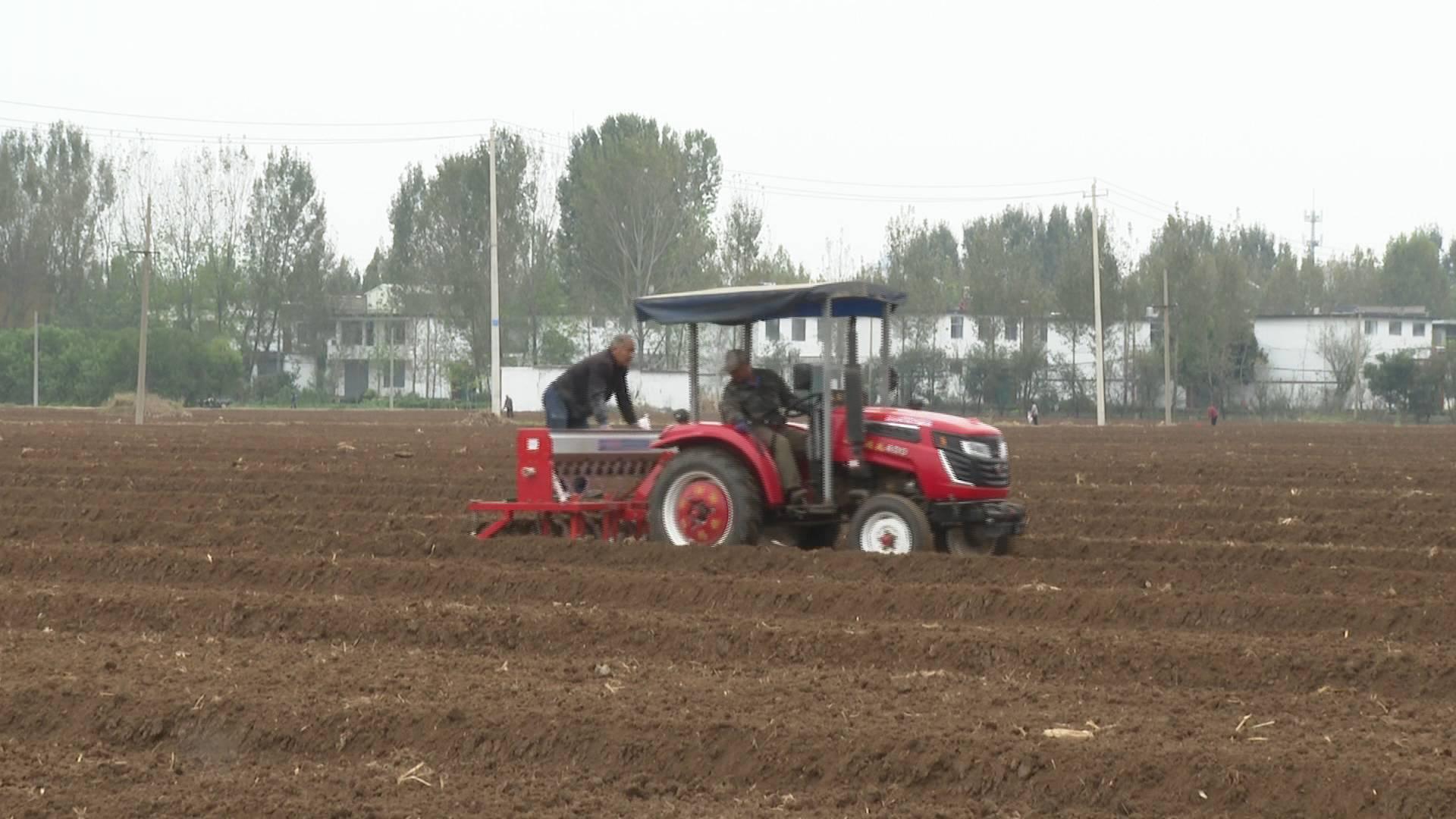 如何减少秋汛对小麦播种影响?省农科院专家:建议选耐寒小麦品种 晚播浅播
