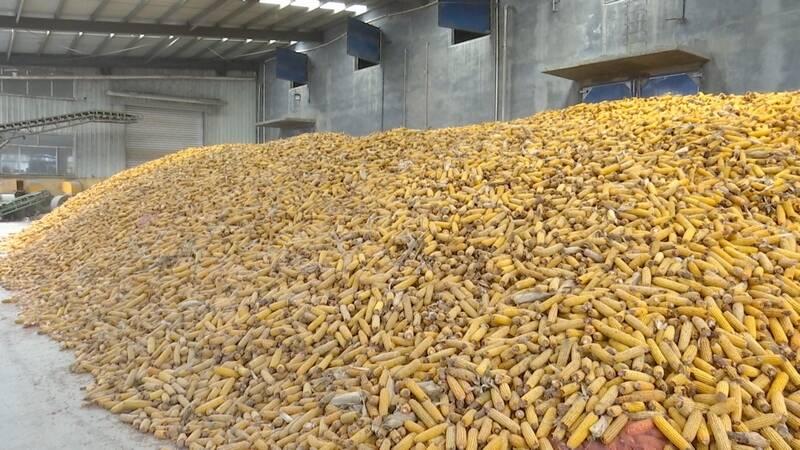 德州齐河建成6处粮食产后服务中心,日烘干粮食4000吨,助力农民减损增收