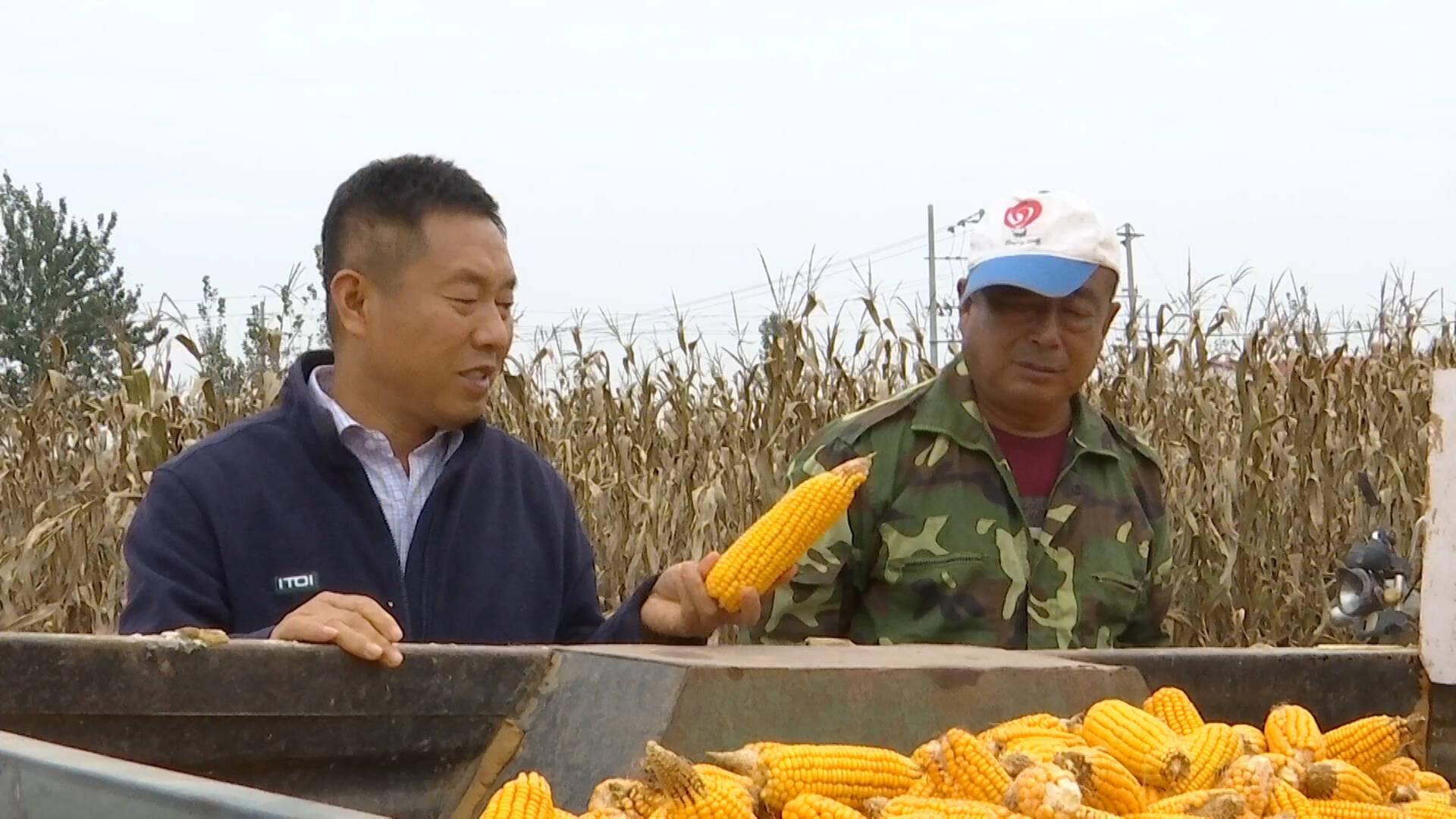 德州乐陵:农技专家组成5个指导小组,分赴各乡镇指导农民秋收秋种