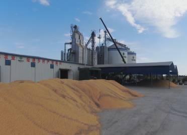 德州平原启用智能粮食烘干机,自动分析玉米水分含量,一天可烘干1000吨