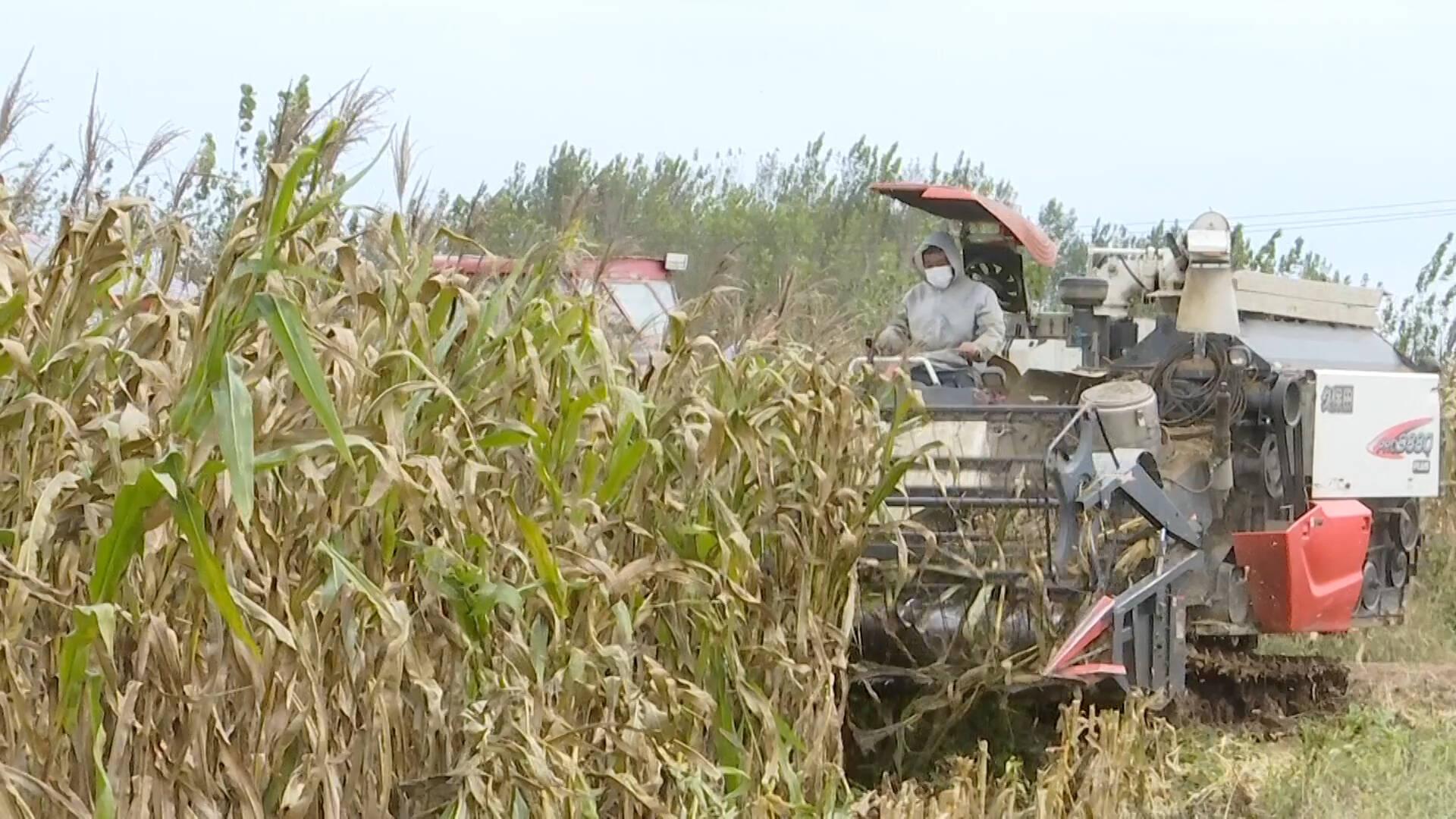 德州乐陵:各部门积极行动 助力农民抢收抢种