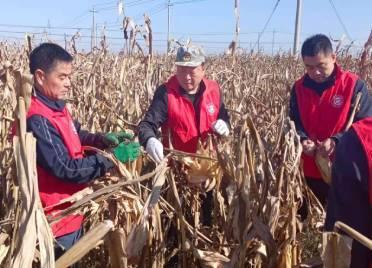 德州临邑:党员志愿服务队深入田间一线 科学施策助农抢收抢种