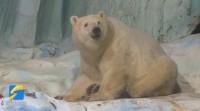 """最美是山""""冬""""丨前方高萌!和青岛极地海洋动物们来一场约会"""