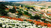 春耕备耕忙起来!山东一体化推进春季农业生产和农村疫情防控