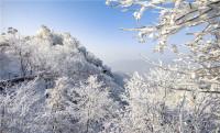 """39秒丨新雪""""醉""""沂蒙  沂蒙山的这场雪太美了"""