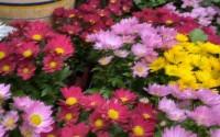 60秒丨年味渐浓 日照迎宾路花卉市场即将进入购销旺季