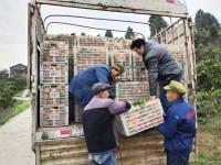 闪电公益行动|果农带货Vlog:清洗不打蜡不着色 25吨忠橙14日到济南