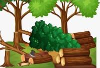 烟台一防护林遭砍伐、倒垃圾  时隔5年终获处罚