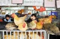 野生动物一律禁止进入市场!济南市全面封闭各类市场活禽交易区和宰杀点