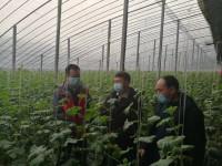 省农业农村厅指导组赴蔬菜主产区查看指导蔬菜生产、运输及防疫措施落实情况
