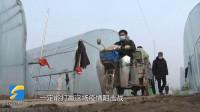 41秒|枣庄一村民将10万斤蔬菜捐给防疫一线 村民自发组织争分夺秒助力采摘