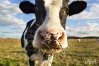 山东省动员饲料屠宰企业恢复生产 保障畜产品市场供应